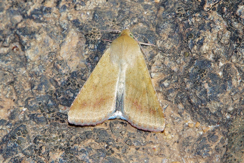 Unidentified Moth 1